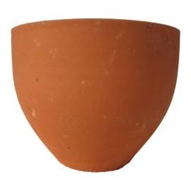 Tulipa lisa