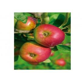 Manzano Reineta Roja