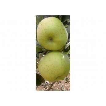 Manzano Reineta Blanca